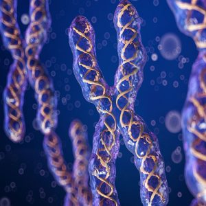 Chromosome Type Classification using Deep Learning