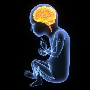 Fetal Brain Detection and Classification