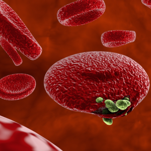 Comparison of Detection Method on Malaria Cell Images