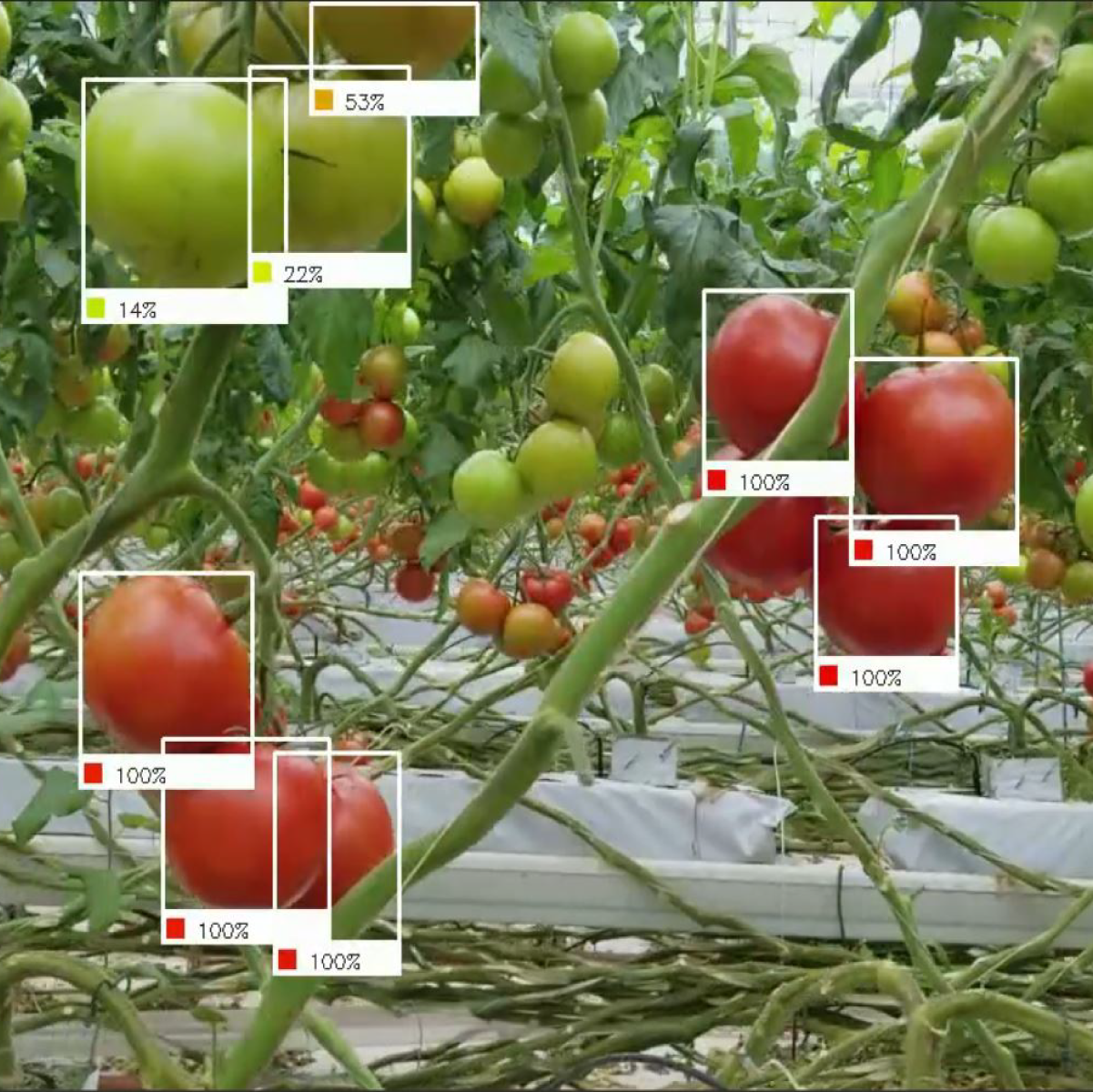 Fruit Detection System Using Deep learning