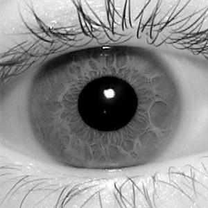 Matlab Code for Iris Segmentation